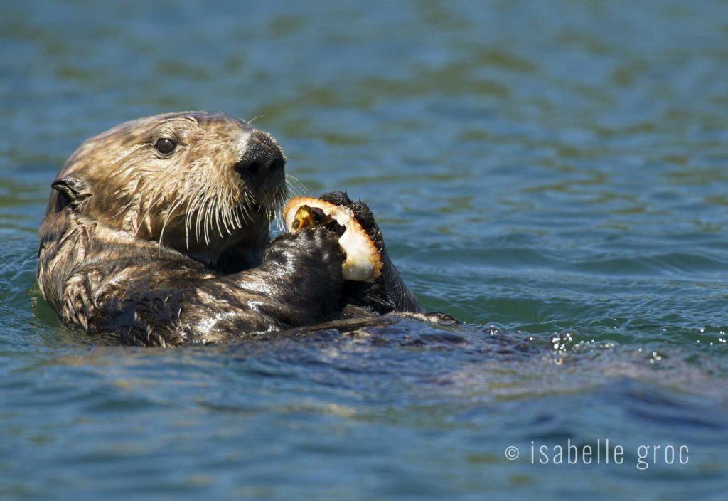 Photo tour announcement: Sea Otter Coastal Systems – June 24